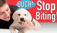 How To Stop Your Puppy From Biting Everything!