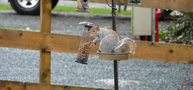 DIY Home Improvement Project – How to Make a Squirrel Feeder